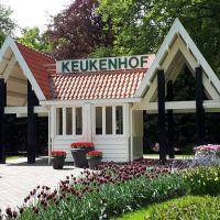 Los Tulipanes del parque Keukenhof. Amsterdam, Holanda.