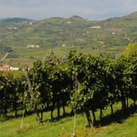 Los Viñedos de Soave fueron declarados Patrimonio Agrícola  de la Humanidad.