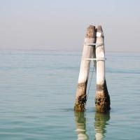 ¿Como se construyó Venecia?. La madera y Venecia, unidas por siempre.